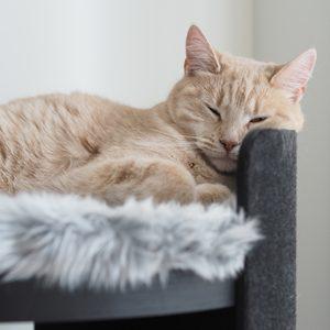Ein Schlafplatz mit Aussicht für Nala